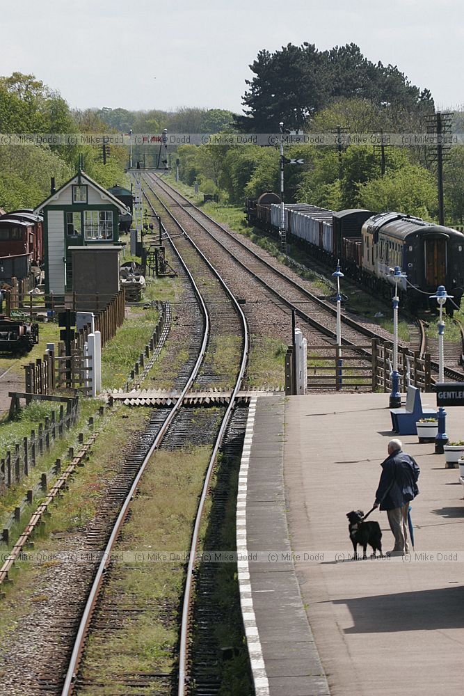 Transport Dog By Train